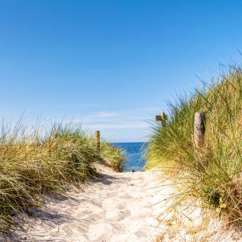 Ein Weg aus Sand zum Meer. Rechts und links von dem Weg ist hohes Grass